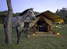 Ride-Kenya-tent-with-horse