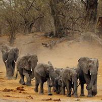 Linyanti dry season, Botswana