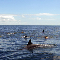 Swimming with dolphins, Lamu, Kenya coast