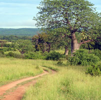 Rob--STz-Ruaha-in-green-se