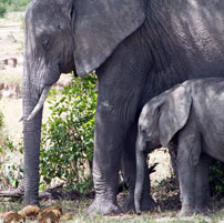 TAN-Mother-and-baby-ellie