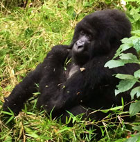 Michele-Rwanda-gorilla-202