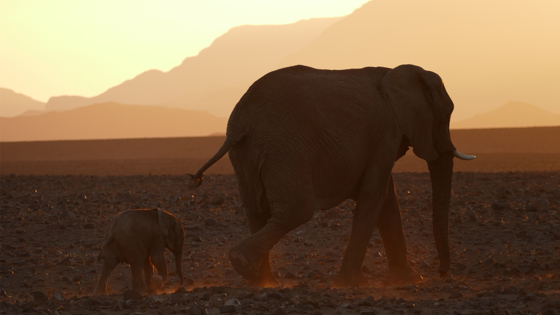 namibia regions damaraland elephants