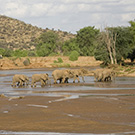 Samburu Game Reserve