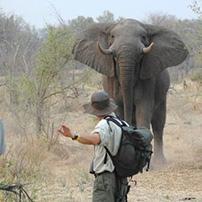 Nik Polenakis, Botswana