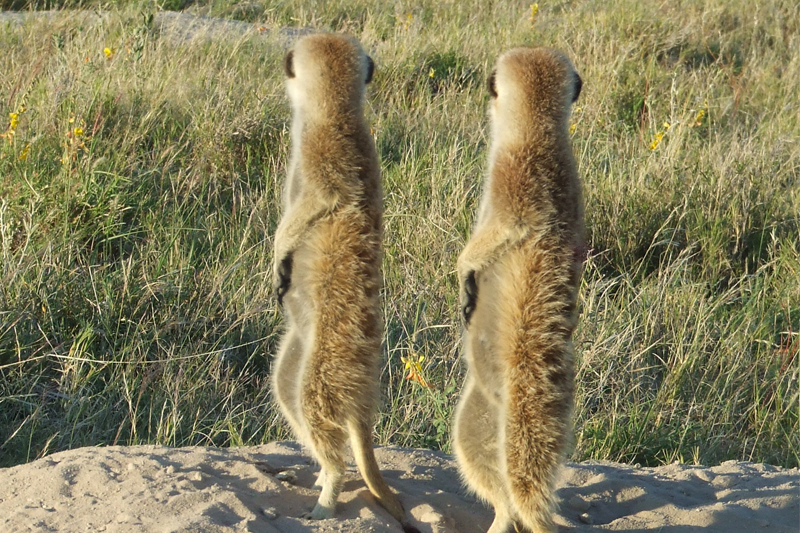 mary-gets-up-close-and-personal-with-the-meerkats-of-makgadikgadi-may-2011