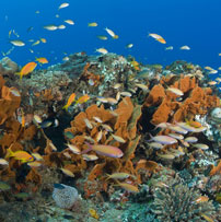 Reef Sponges, South Africa