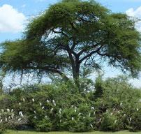 Mary-egrets