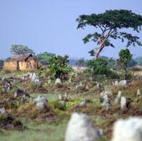 Bangweulu-termite-mounds