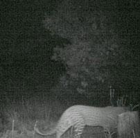 Leopard-Jan-2014-202