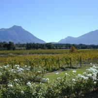 SA---Vineyard-views-Tulbach