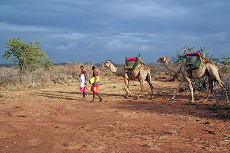 munget-lemouyo-the-samburu-coming-of-age-celebrations-Karisia-camels
