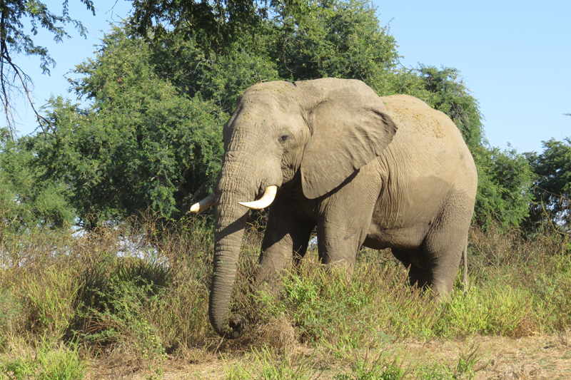 frances discovers the safari havens of zambia june 2017