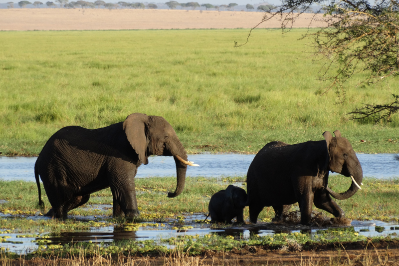 julia explores tarangire and the northern serengeti