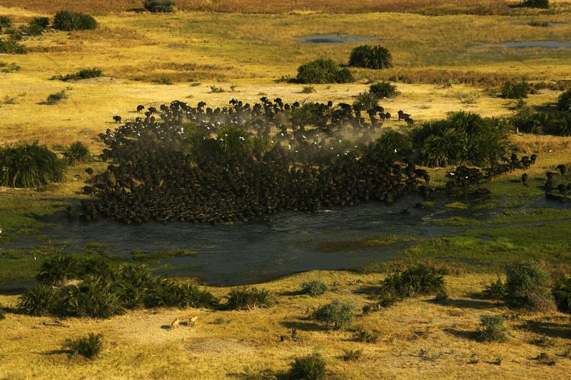 Safari Consultants, Botswana, Duba Plains Camp