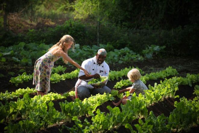Elewana Tortilis Camp Vegetable Garden