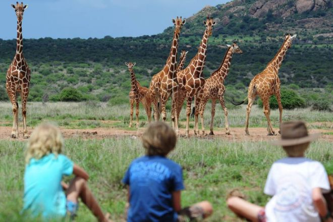 Karisia Walking Safaris Children watching Giraffe