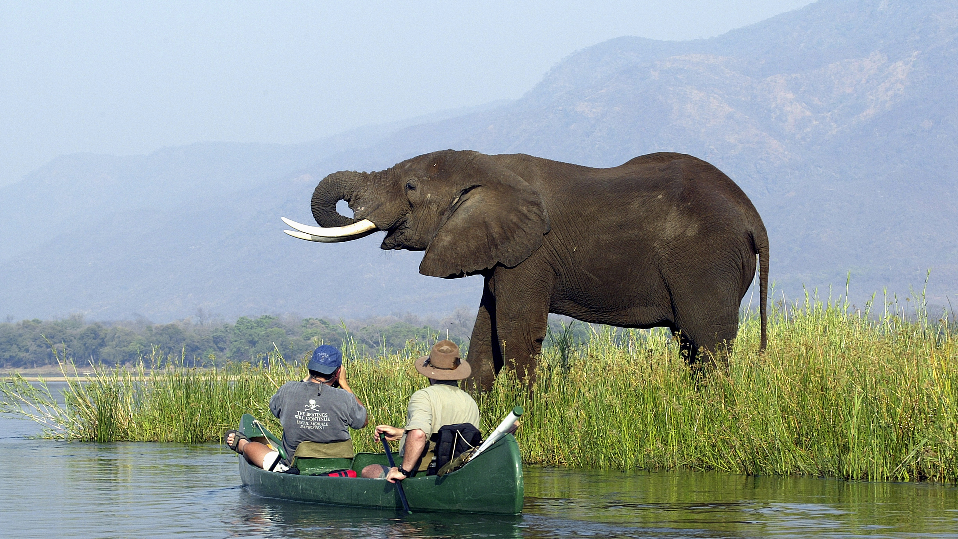 Canoeing with elephant Zambezi
