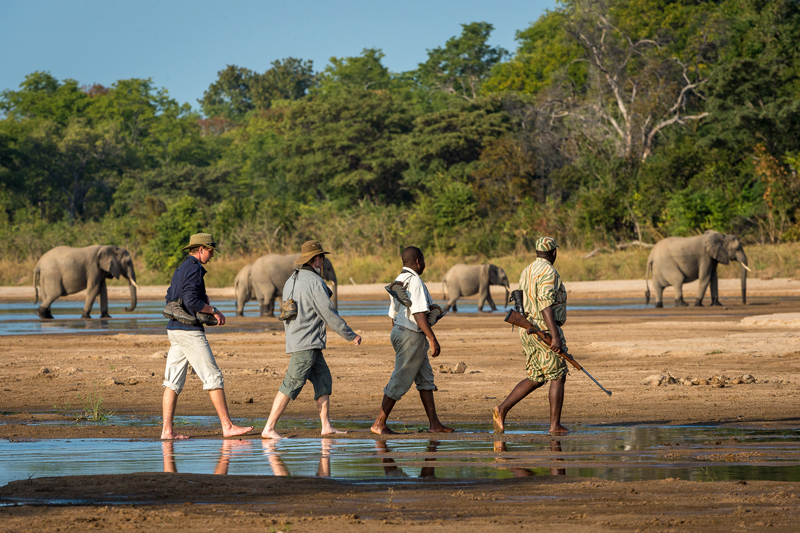 Adventure walking zambia elephant