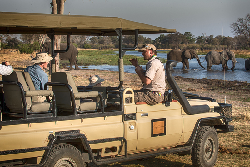 Private and Specialist Guiding botswana golden africa safaris game drive elephant