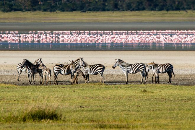 Gibbs Farm Ngorongoro Crater flamingo and zebra