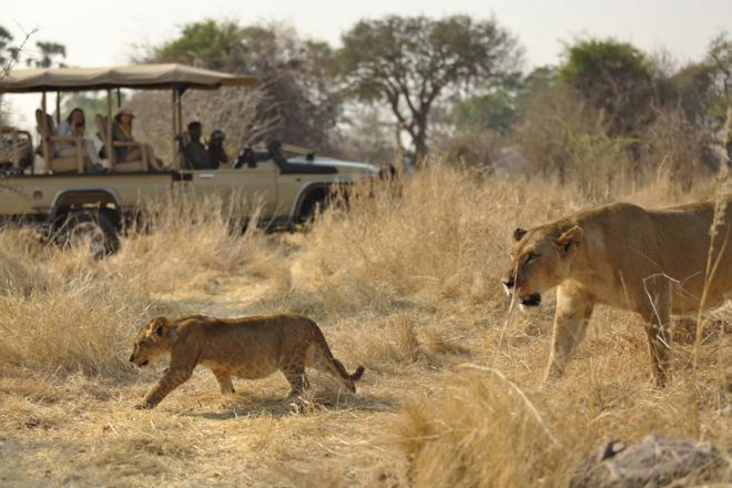 Ikuka Safari Camp game drive lions