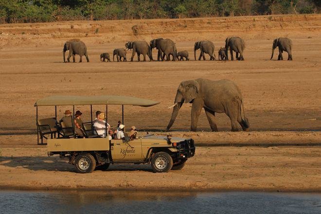 Kafunta River Lodge Game Drive Elephant