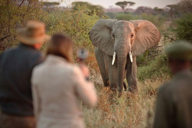 Kichaka Expeditions bush walk elephant
