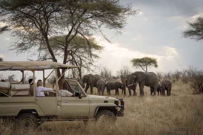 Kigelia Ruaha game drive elephant