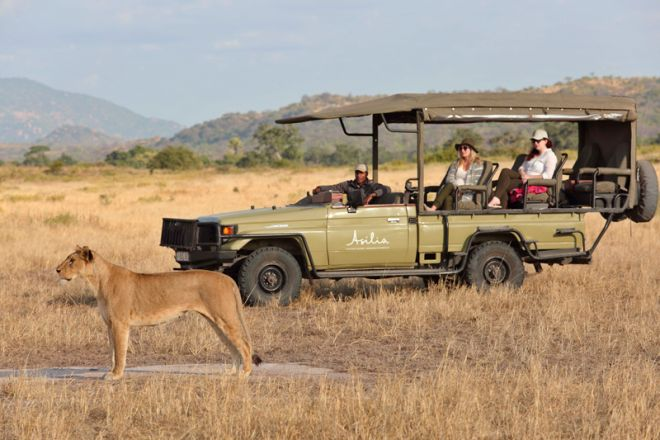 Kwihala Tented Camp game drive lion