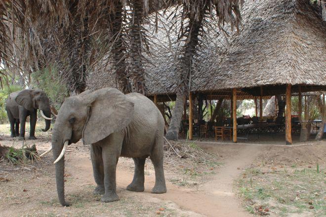 Lake Manze Tented Camp dining area elephant