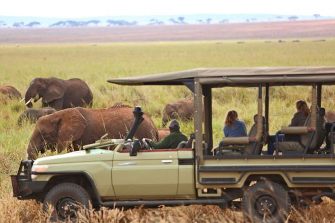 Little Oliver's Camp game drive elephant marsh