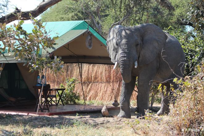 Mdonya Old River Camp tent exterior elephant