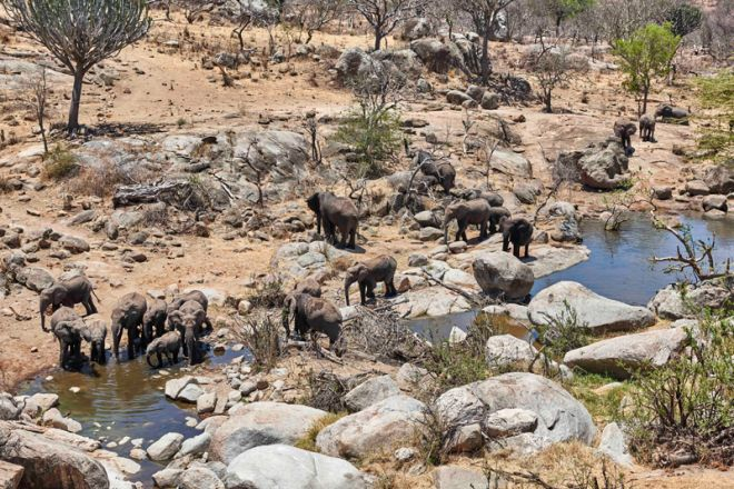 Mwiba Lodge elephant watering hole