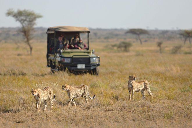 Namiri Plains game drive cheetah