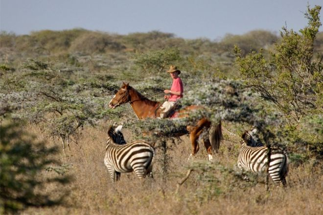 Ol Malo Lodge Horse Riding Zebra