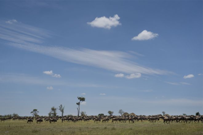 Olakira Migration Camp wildebeest migration