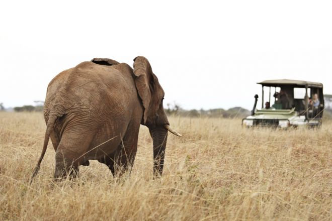 Olivers Camp game drive elephant