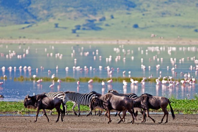 The Highlands wildebeest and flamingoes