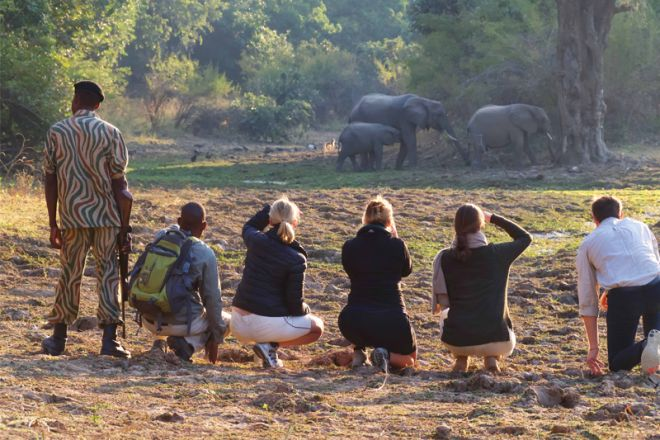 Time + Tide Chinzombo Walk Elephants