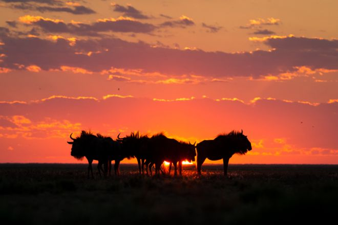 Time + Tide King Lewanika Wildebeest Sunset