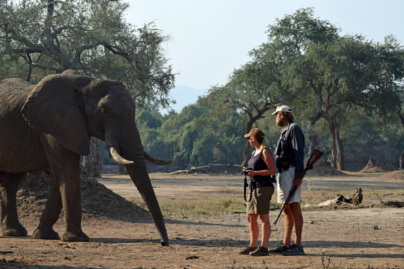zimbabwe walking mana pools stretch with elephant