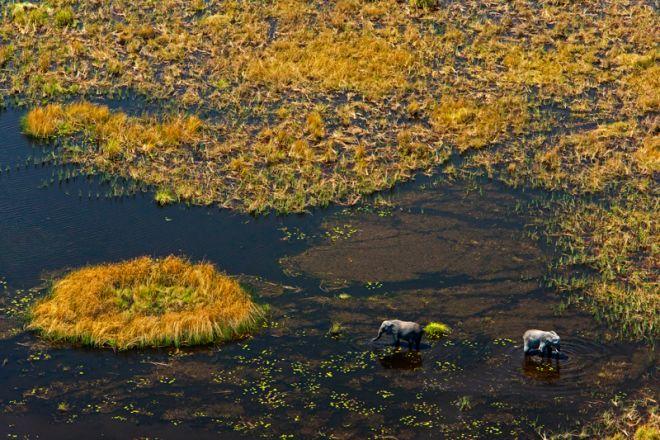 Zarafa Camp Landscape Elephant