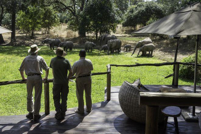 Bilimungwe View - Elephant
