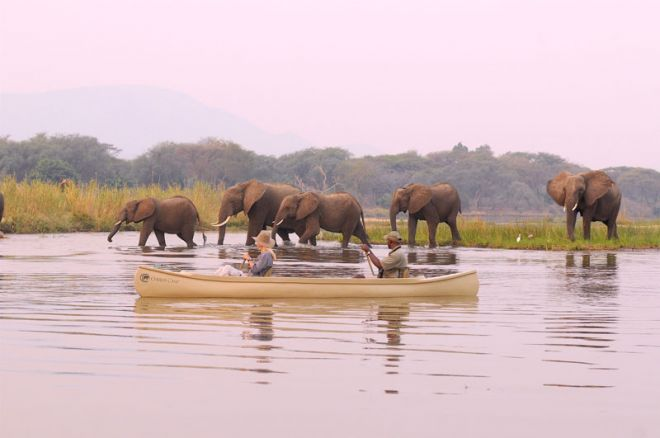 Chiawa Camp Canoeing Elephant