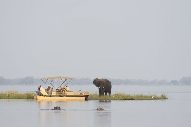 Chiawa Camp Pontoon Boat - Elephant and Hippo