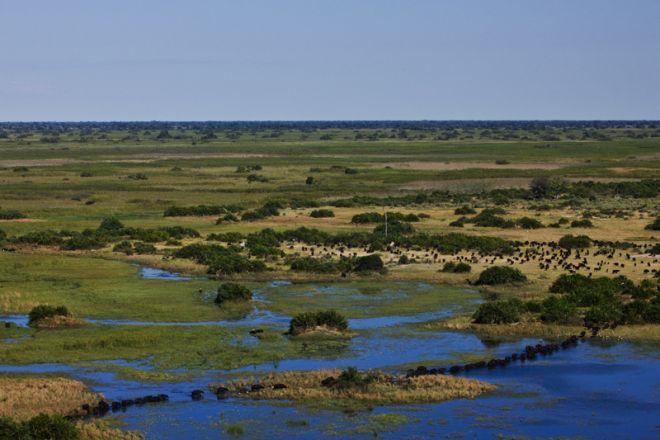 Duba Plains View Buffalo Herd