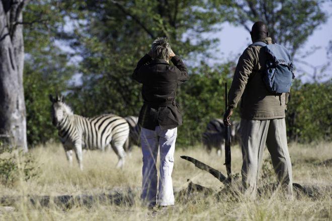 Golden Africa Safaris Walking Zebra Khwai