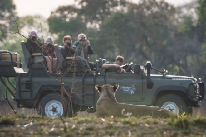 Jeffery & McKeith Game Drive Lion