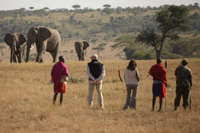 Kicheche Valley Camp Walk Elephant